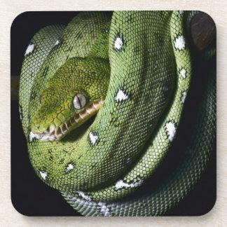 ボリビアの緑の木のヘビのエメラルドのボア ドリンクコースター