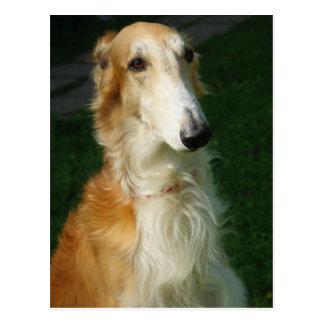ボルゾイ犬の美しい写真の郵便はがき ポストカード