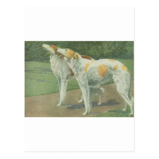 ボルゾイ(ロシアのなWolfhound) ポストカード