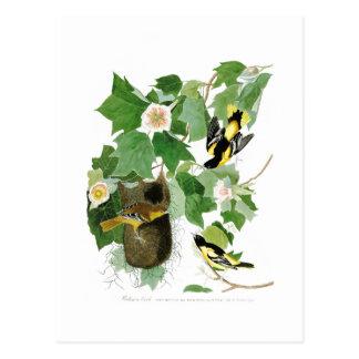 ボルティモア・オリオールズジョン・ジェームズ・オーデュボン鳥アメリカ ポストカード
