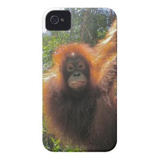 ボロネオの雨林のオランウータンの島 Case-Mate iPhone 4 ケース