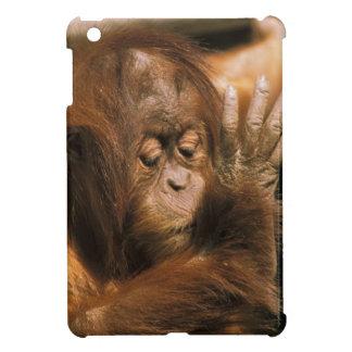 ボロネオ。 捕虜のオランウータン、かpongo pygmaeus. iPad miniケース