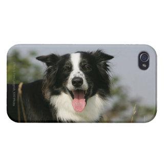 ボーダーコリーの喘ぐHeadshot 1 iPhone 4/4S Cover