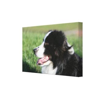 ボーダーコリーの子犬の置くこと キャンバスプリント