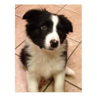 ボーダーコリーの子犬の郵便はがき ポストカード