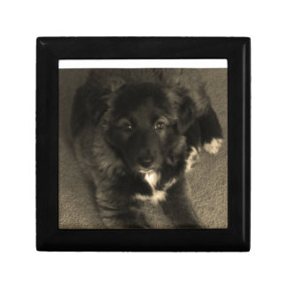 ボーダーコリーの子犬 ギフトボックス