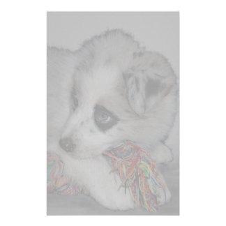 ボーダーコリーの子犬、青いmerle 便箋