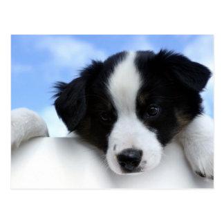 ボーダーコリーの小犬のかわいい写真の郵便はがき ポストカード