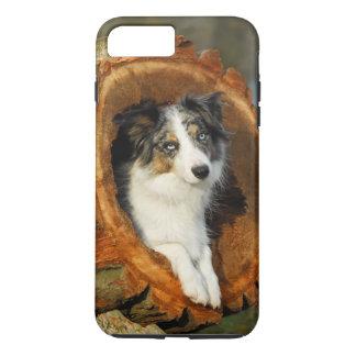 ボーダーコリーの青いMerle犬、細胞Phonecase iPhone 7 Plusケース