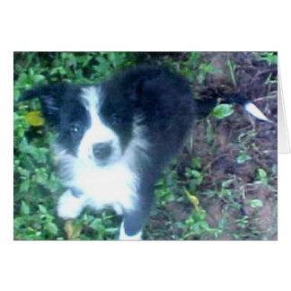 ボーダーコリーのPuppy~Photoカード カード