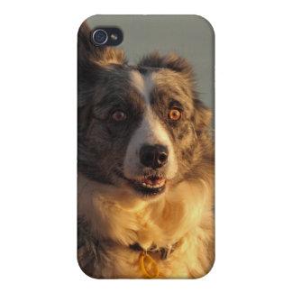ボーダーコリー犬の連続したiphone 4ケース iPhone 4/4S cover