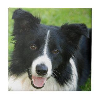 ボーダーコリー犬は文字ペットを加えます タイル