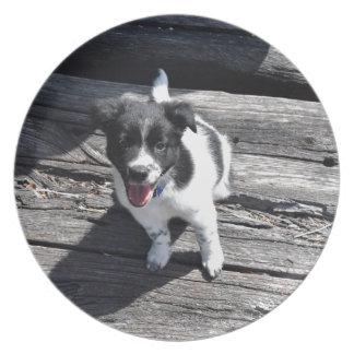 ボーダーコリー犬田園クイーンズランドオーストラリア プレート