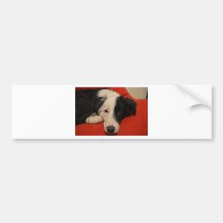 ボーダーコリー犬 バンパーステッカー