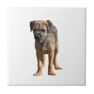 ボーダーテリア犬の美しいタイルかtrivetのギフト タイル