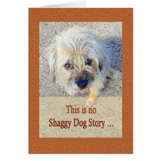 ボーダーテリア、提案、むく毛の犬、ユーモア カード