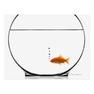 ボールの金魚 はがき
