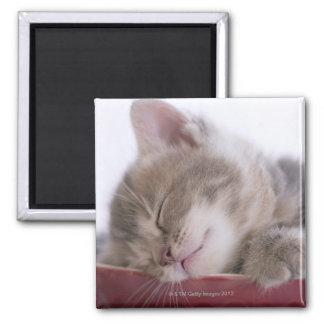 ボール2で眠っている子ネコ マグネット