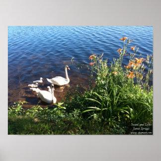 ポスター: 白鳥およびユリ ポスター