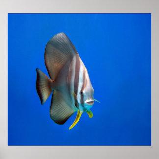 ポスター-青いこうもりの魚 ポスター