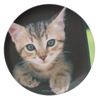 ポストのの中の子ネコ プレート