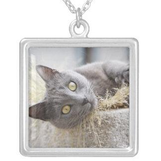 ポット、Olargues、Herault、フランスにあっている灰色猫 シルバープレートネックレス