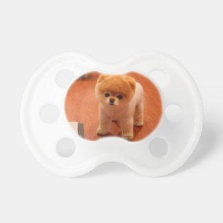 ポメラニア犬かわいい子犬スピッツpom犬pomの子犬 おしゃぶり