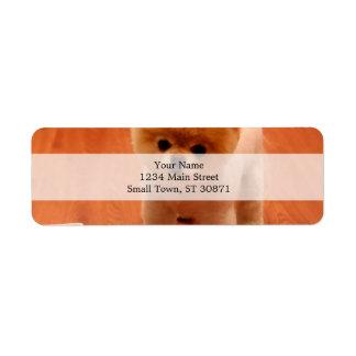ポメラニア犬かわいい子犬スピッツpom犬pomの子犬 ラベル