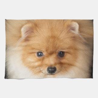ポメラニア犬のスピッツ キッチンタオル