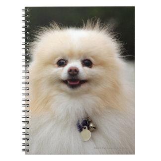 ポメラニア犬のHeadshot 1 ノートブック