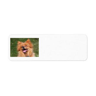 ポメラニア犬犬のラベル ラベル