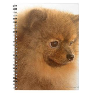 ポメラニア犬 ノートブック