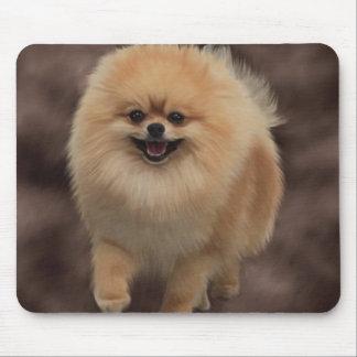 ポメラニア犬 マウスパッド