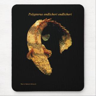 ポリプテルス・エンドリケリー マウスパッド