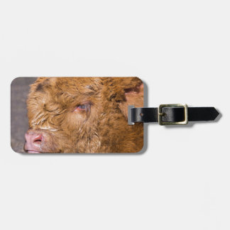 ポートレートのヘッド生まれたばかりのなスコットランドの高地居住者の子牛 ラゲッジタグ