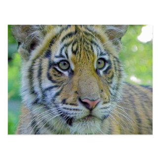 ポートレートの上の虎の子の終わり ポストカード