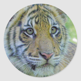 ポートレートの上の虎の子の終わり ラウンドシール