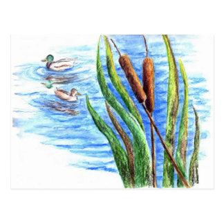 マガモおよびネコヤナギ-水彩画の鉛筆 ポストカード