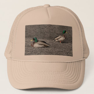 マガモのアヒルの帽子 キャップ