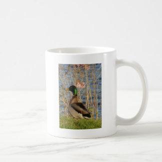 マガモの黙想 コーヒーマグカップ