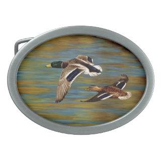 マガモは池上の飛行を引込めます 卵形バックル