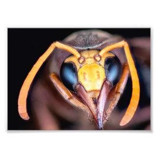 マクロスズメバチの昆虫 フォトプリント