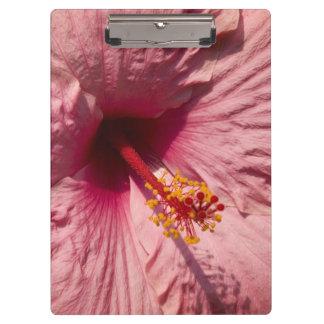 マクロピンクのハイビスカスの花 クリップボード