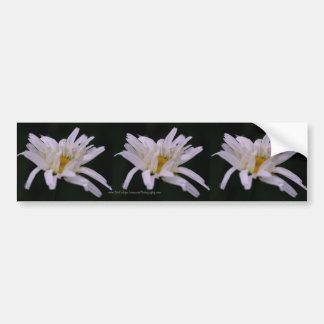 マクロ白いデイジーの花のバンパーステッカー車の芸術 バンパーステッカー