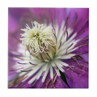 マクロ紫色クレマチスの花 タイル