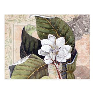 マグノリアが付いているヴィンテージの植物のコラージュ ポストカード
