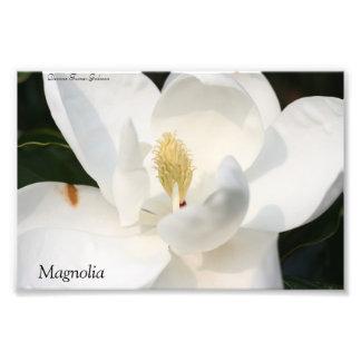 マグノリアの写真のプリント フォトプリント