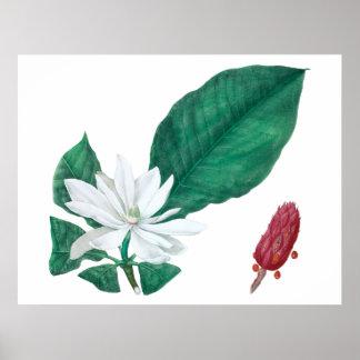 マグノリアの横の白く大きい花のプリント ポスター