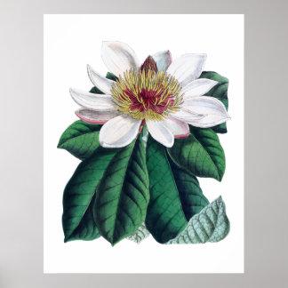 マグノリアの白く大きい花Cusion ポスター
