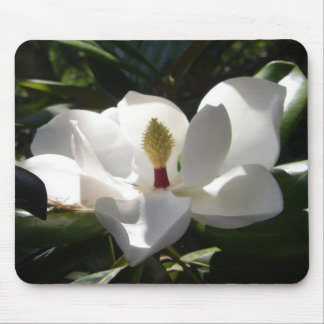 マグノリアの花の木によっては写真撮影のmousepadが開花します マウスパッド
